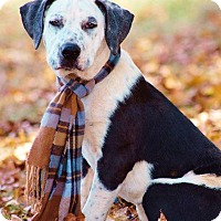 Adopt A Pet :: Ricky Bobby IN CT - East Hartford, CT