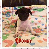 Adopt A Pet :: Bonny - Brea, CA