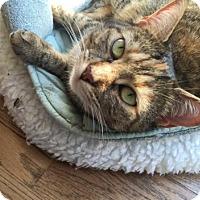 Adopt A Pet :: Layla - New York, NY