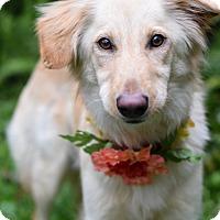 Adopt A Pet :: Bonnie - Baton Rouge, LA