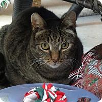 Adopt A Pet :: Hunter - San Carlos, CA