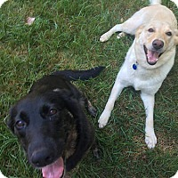 Adopt A Pet :: Sissy & Butters - Towson, MD