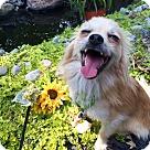 Adopt A Pet :: Maxwell