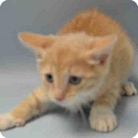Adopt A Pet :: BIONIC - Brooklyn, NY