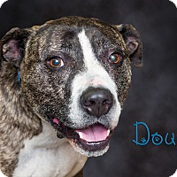 Adopt A Pet :: Doug - Somerset, PA