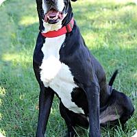 Adopt A Pet :: Rogga ADOPTION PENDING - Waldorf, MD