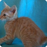 Adopt A Pet :: Bogart - Staunton, VA
