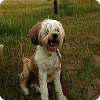 Adopt A Pet :: George - Colorado Springs, CO
