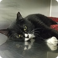 Adopt A Pet :: Janice - Elyria, OH