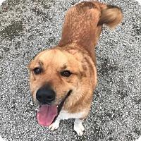 Adopt A Pet :: Buster Brown - Greensboro, NC
