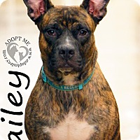 Adopt A Pet :: Bailey - Newport, KY
