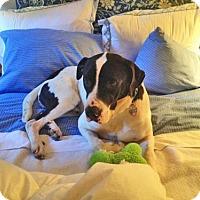 Adopt A Pet :: MILTON - NYC, NY