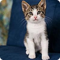 Adopt A Pet :: Nemo - Eagan, MN