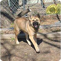 Adopt A Pet :: Luna - New Boston, NH