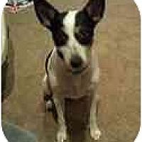 Adopt A Pet :: Maisey - Glen Burnie, MD