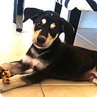 Adopt A Pet :: Dale - Miami, FL