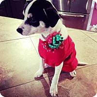 Adopt A Pet :: Marley - Ogden, UT