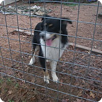 Adopt A Pet :: Happy - Buchanan Dam, TX