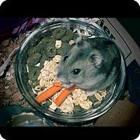 Adopt A Pet :: The Spice Girls! - Bensalem, PA
