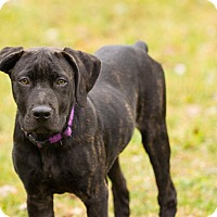 Adopt A Pet :: Tinsley - Virginia Beach, VA