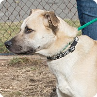 Adopt A Pet :: Mason - Elmwood Park, NJ