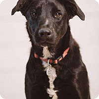 Adopt A Pet :: Sawyer - Portland, OR