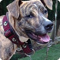 Adopt A Pet :: Natchez - Thompson's Station, TN