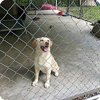 Adopt A Pet :: Shiloh - Hohenwald, TN