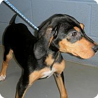 Adopt A Pet :: Jelly Bean - Atlanta, GA