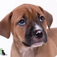 Adopt A Pet :: Paisley - Savannah, GA