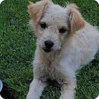 Adopt A Pet :: Mickey - Livermore, CA