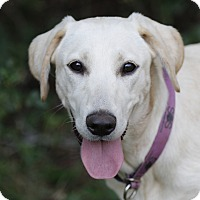 Adopt A Pet :: Annie - Good Hope, GA