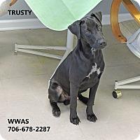 Adopt A Pet :: Trusty - Washington, GA