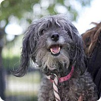 Adopt A Pet :: *GLINDA - Long Beach, CA