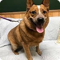 Adopt A Pet :: Jax - Maryville, MO