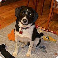 Adopt A Pet :: Trooper - Topeka, KS