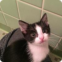Adopt A Pet :: Yanda Sykes - Austin, TX