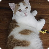 Adopt A Pet :: Dexter - Taylorsville, IN