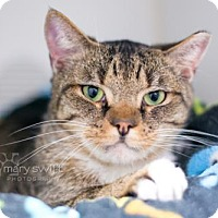 Adopt A Pet :: Jacob - Reisterstown, MD