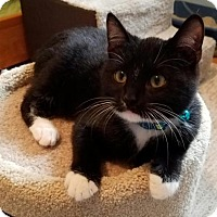 Adopt A Pet :: Tyrell - ADOPTION PENDING!! - Potomac, MD