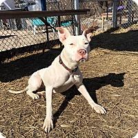 Adopt A Pet :: Alexia - Cleveland, OH