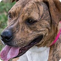 Adopt A Pet :: Cindy - Miami, FL