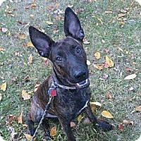 Adopt A Pet :: Poppy - Bardonia, NY