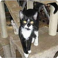 Adopt A Pet :: Merlin - Clay, NY