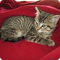Adopt A Pet :: Dewey - Richland, MI