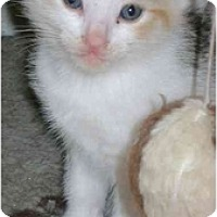 Adopt A Pet :: Cute girl - Etobicoke, ON