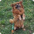 Adopt A Pet :: Redd