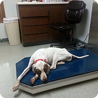 Adopt A Pet :: CLANCY - Getting better! - Wood Dale, IL