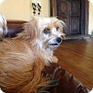 Adopt A Pet :: BAMBI (CP)