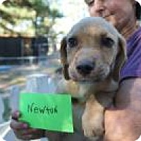 Adopt A Pet :: Baby Newton - Marlton, NJ